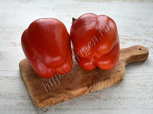мужской и женский плоды сладкого перца